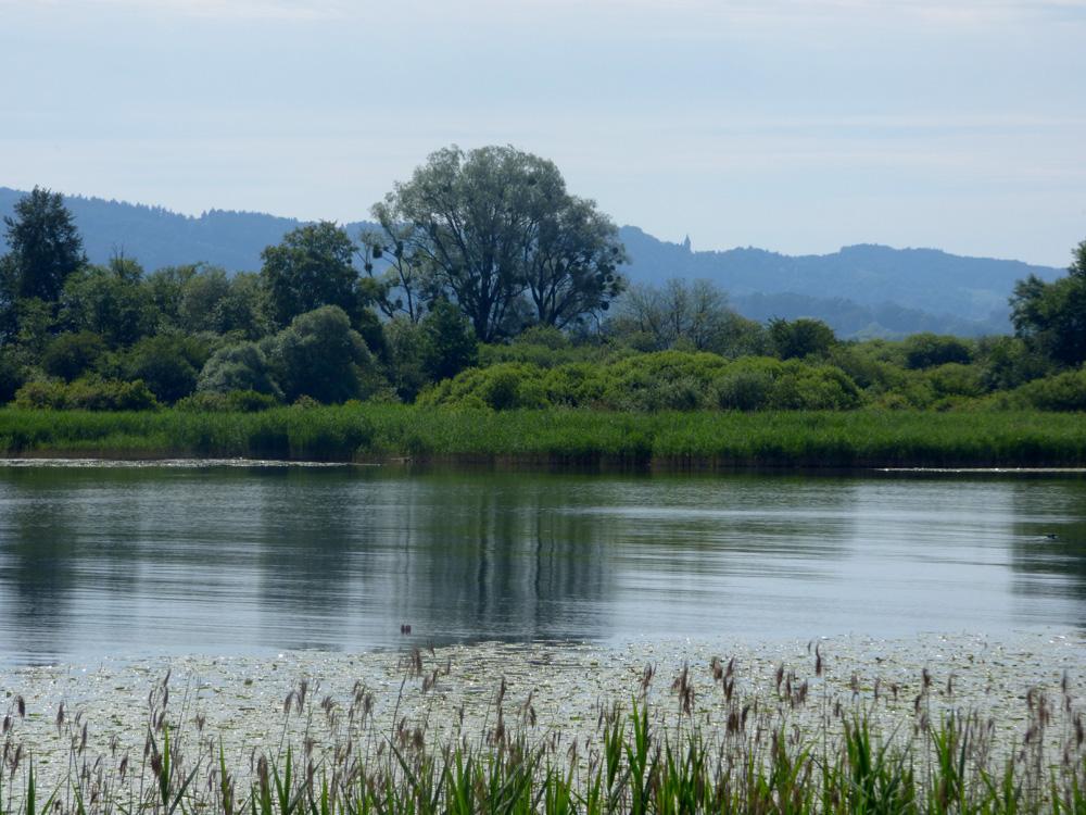 Naturraum Ammerseegebiet Foto: M. Blacek