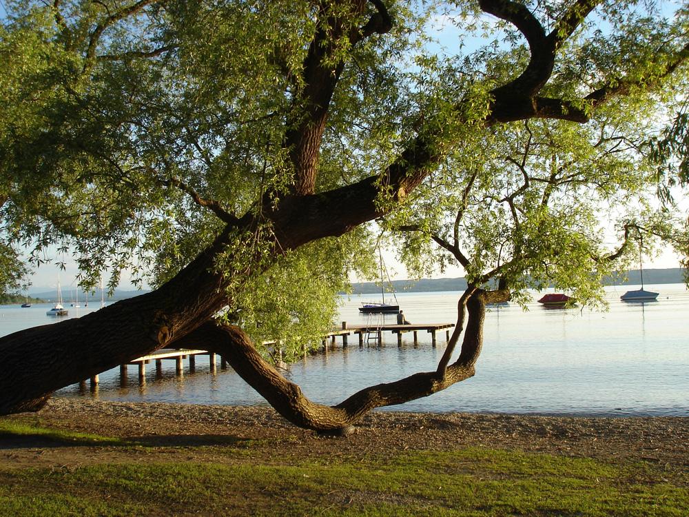 Bäume Foto: M. Blacek